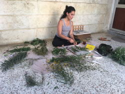 Maryam Sedaghatpour pressing plants after a day of collecting from Baniyas, Syria in July 2018.