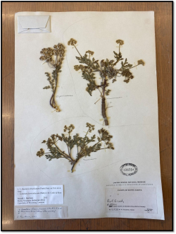 A mixed herbarium sheet before the splitting process.