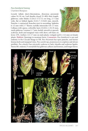 A page plate featuring Poa chambersii Soreng from the Field Guide to the Grasses of Oregon and Washington.