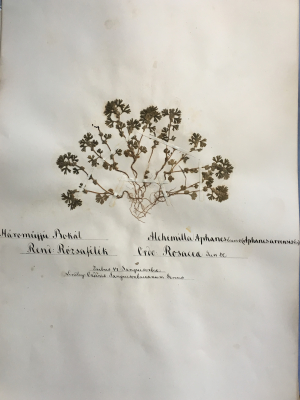 A Hungarian Rosaceae collection donned with patient calligraphy, made by Lajos Kossuth. (photo by Julia Beros)