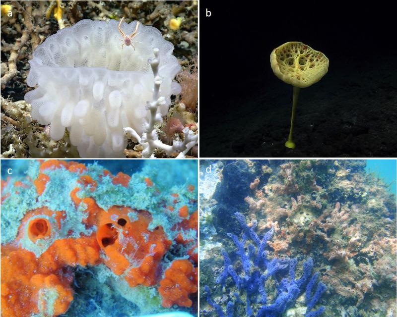 Fig.1 - Diversity of sponges