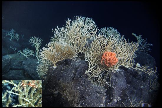 Fig.4 - Sarostegia sponge_garden
