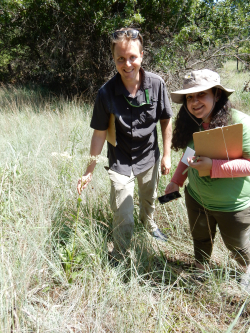 Morgan Gostel and Farahnoz Khojayori collecting Arnoglossum plantagineum at the Fort Worth Nature Center. (photo courtesy of Bob O'Kennon)
