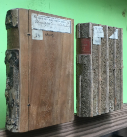 Two quasi-books, known as Holz Bücher, camouflaged by their binding made of tree material, act as plant records for various tree collections. Ranging in age some are 130 years old. (photo by Julia Beros)