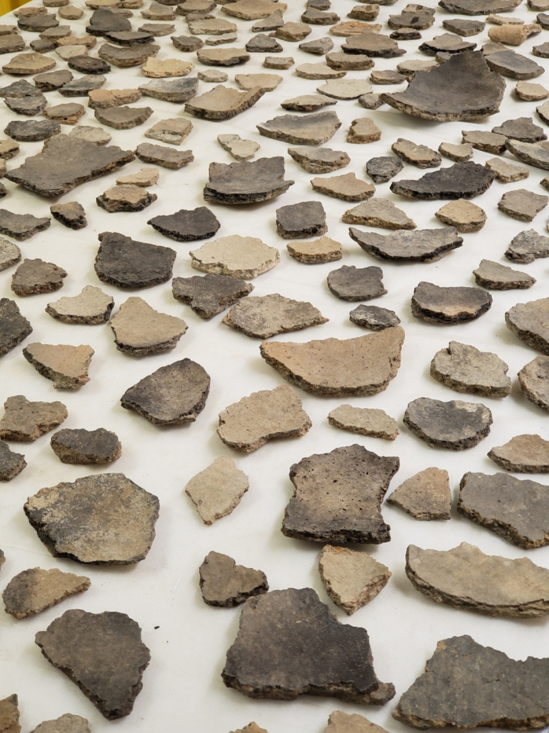 Ceramic sherds laid out on a table, inside up