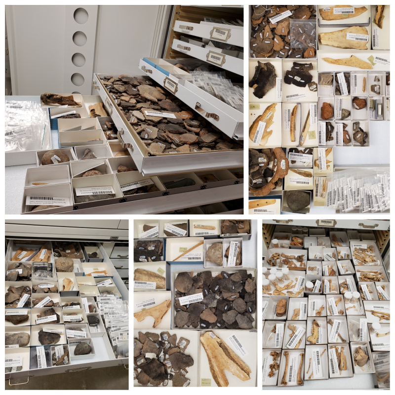 A collage of photos of open artifact drawers, showing bone, stone, and ceramic artifacts along with barcode labels.