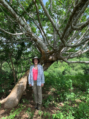 Betsy Collins with a palo santo tree growing at Reserva Palomar. (photo by Lewis Morfe)