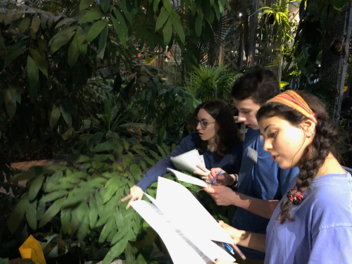 Students from a winter botany after school workshop visit the U.S. Botanic Garden to identify a number of aroids using a dichotomous key. (photo by Lee Coykendall, USBG).