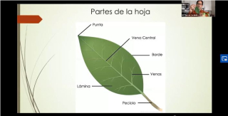 Marcos Caraballo Ortiz teaches students how to draw different types of leaves during the five-day Spanish-language virtual program, ¡Descubre la historia natural!