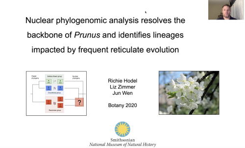 Richard Hodel's title slide from his recorded talk on the phylogenetics of Prunus, from the Botany 2020 meeting held virtually on July 27-31.