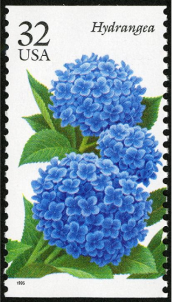 A 1995 postage stamp with a blue hydrangea, from the National Postal Museum. Copyright United States Postal Service. All rights reserved.