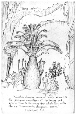 Harolds drawing Toxis potentis gray