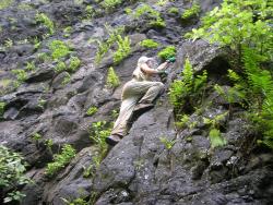 Marquesas Figure 35A. Oxalis simplifolia  Nephrolepis Hanahouua   Ua Huka  w J-Y Meyer_2005_SPP