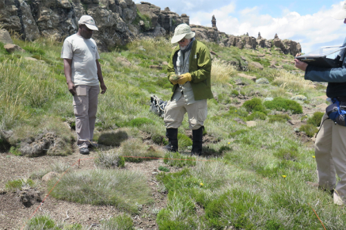 Anthony Mapaura (doctoral student, left) and Rob Soreng in the Afroalpine grassland of Tiffindell, below Ben McDuhui, Eastern Cape Province, South Africa. (photo by Mitsy Sylvester)
