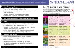 Back image of the Northeast Native Pollinator Garden Recipe Card