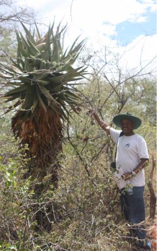 Sebsebe Demissew in Namibia