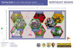 Front image of the Northeast Native Pollinator Garden Recipe Card